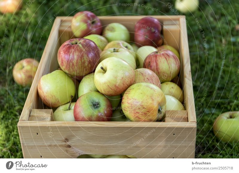 A box full of fresh apples. Fruit Organic produce Vegetarian diet Healthy Eating Agriculture Forestry Summer Autumn Grass Garden Box Wood Fresh Natural To enjoy