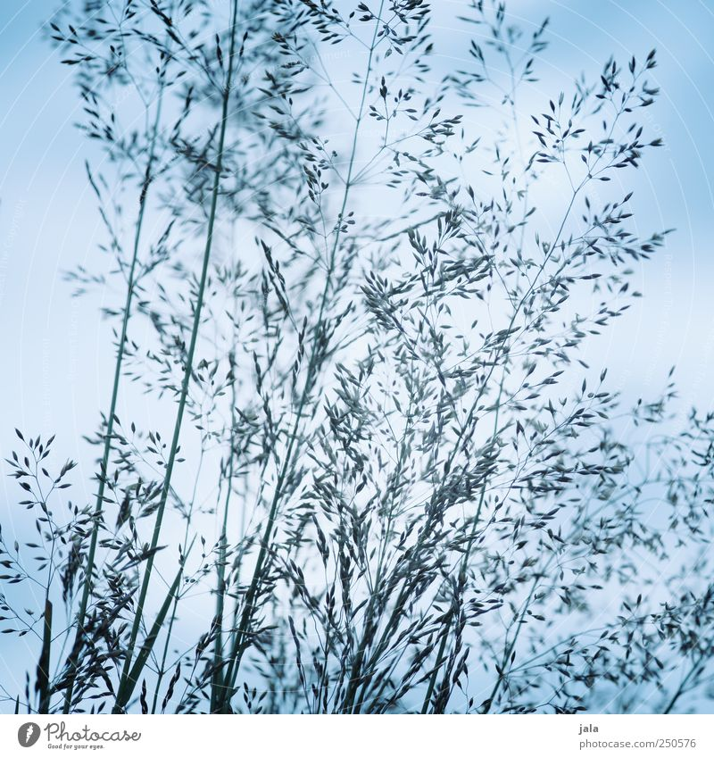 Sky Nature Blue Plant Meadow Environment Grass Natural Foliage plant Wild plant