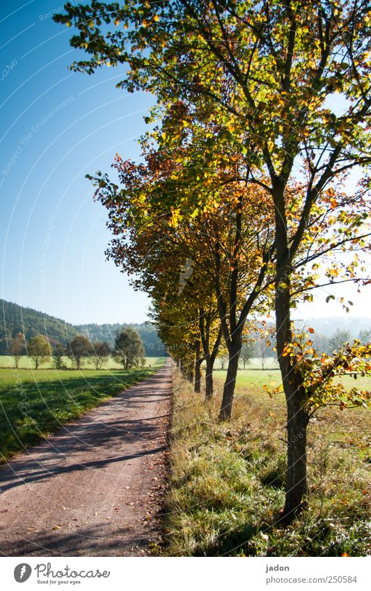 Blue Tree Leaf Far-off places Street Meadow Autumn Lanes & trails Horizon Hiking Romance Infinity Idyll Discover Beautiful weather Avenue