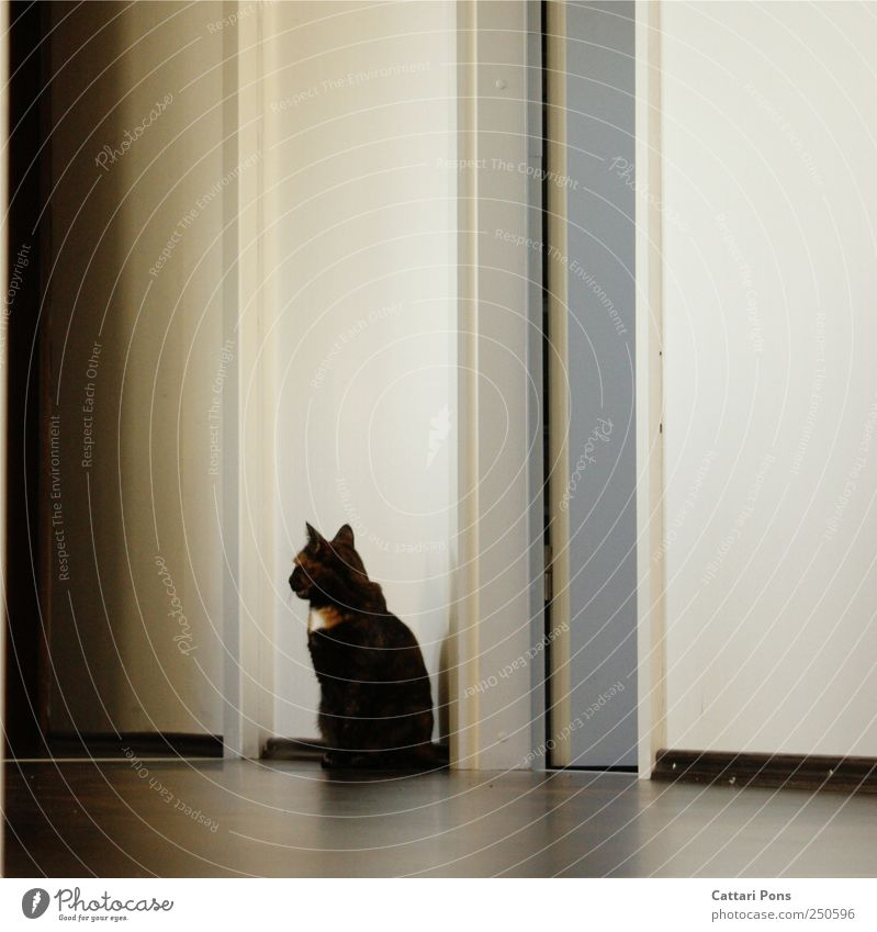 Cat Beautiful Wall (building) Brown Sit Wait Wild Natural Cute Uniqueness Observe Thin Discover Pet Hallway Original
