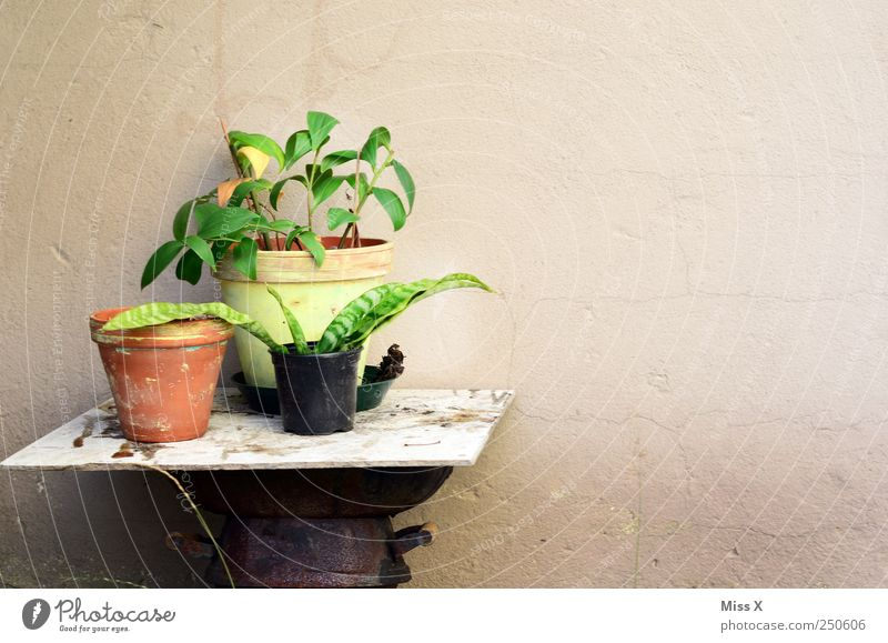 there is a little green Decoration Plant Flower Leaf Growth Shoot Germinate Pot plant Flowerpot Table Old repot Colour photo Deserted Copy Space right