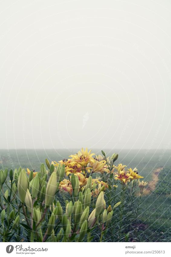 Sky Nature Green Plant Flower Far-off places Yellow Autumn Environment Landscape Field Fog Empty Natural Gloomy Bad weather