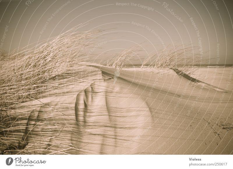 Nature Beach Relaxation Environment Landscape Sand North Sea Dune Discover Marram grass North Sea Islands