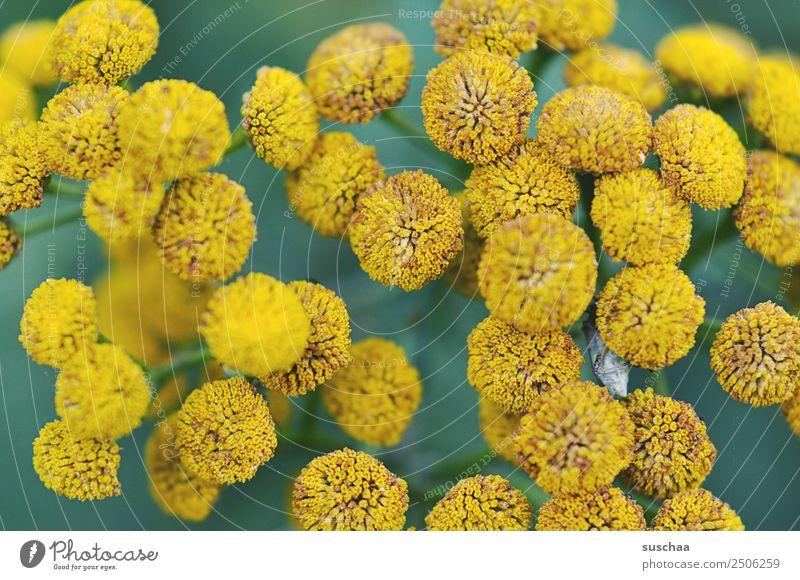 flowery dots Flower Blossom Nature Exterior shot Plant wax Garden Park Summer Beautiful Yellow Shallow depth of field