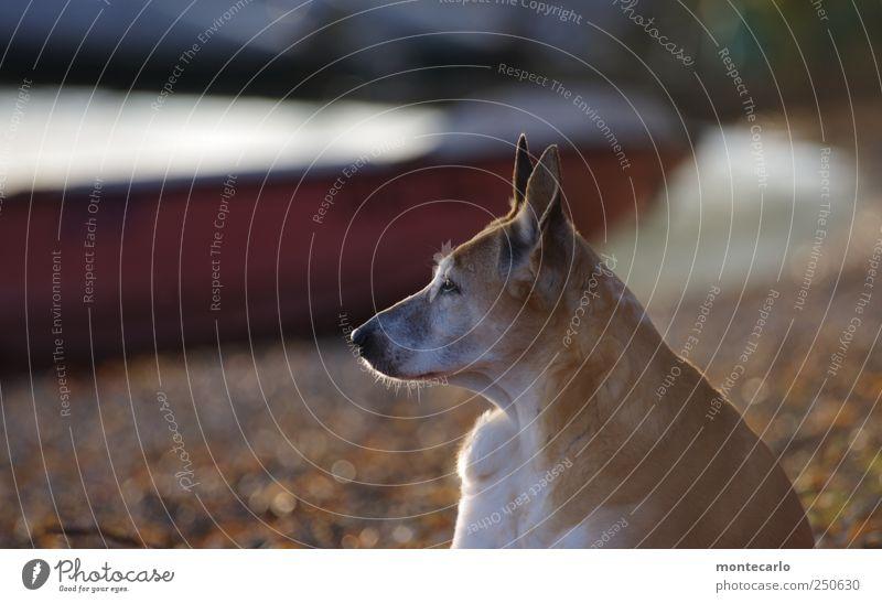 Nature Animal Environment Dog Animal face Pelt Listening Lakeside Pet Perspective