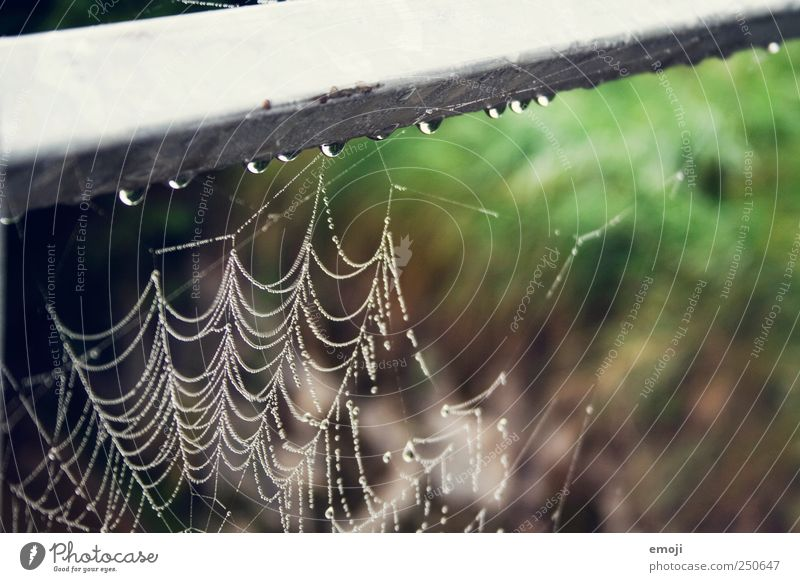 trickle Nature Plant Animal Bad weather Rain Wet Natural Spider's web Net Habitat Drops of water Grief Colour photo Exterior shot Close-up Detail