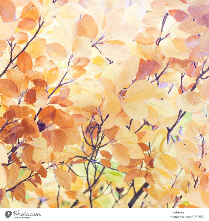 golden times Style Life Relaxation Calm Meditation Vacation & Travel Agriculture Forestry Art Environment Nature Landscape Plant Autumn Leaf Foliage plant