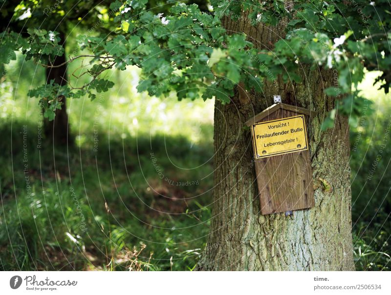 Nature Summer Tree Forest Life Healthy Fear Characters Communicate Signs and labeling Beautiful weather Signage Cool (slang) Threat Protection Safety
