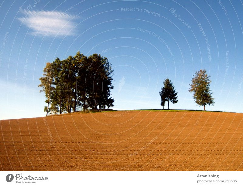 On the hill Environment Nature Landscape Plant Earth Sand Sky Clouds Autumn Weather Beautiful weather Tree Field Hill Stand Tall Agriculture Coniferous trees