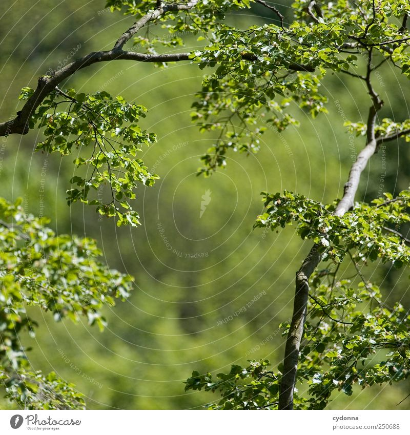 Nature Green Beautiful Summer Leaf Calm Forest Far-off places Relaxation Environment Life Freedom Air Dream Time Wind