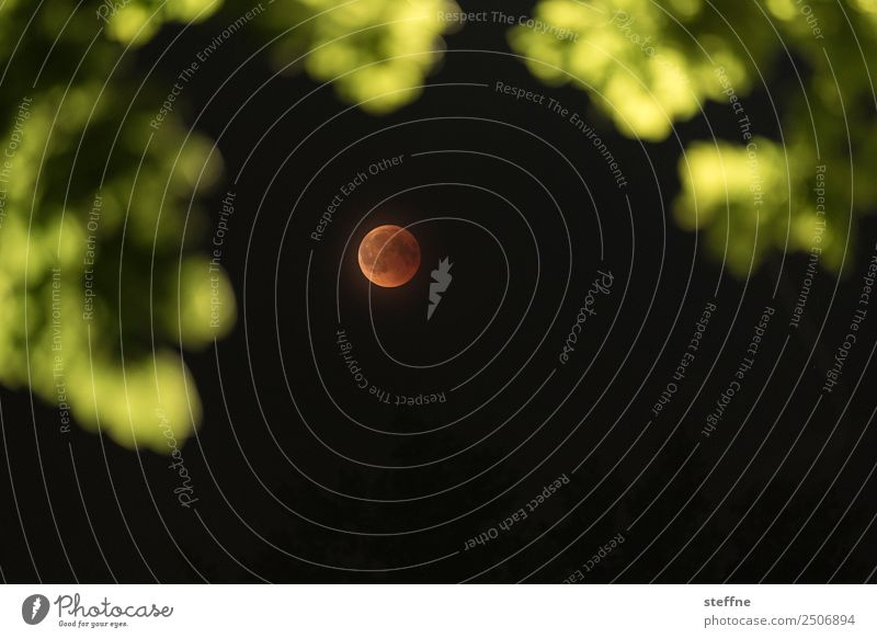 Blood moon at total lunar eclipse, photographed by tree Environment Nature Moon Lunar eclipse Full  moon Exceptional blood moon red moon Colour photo