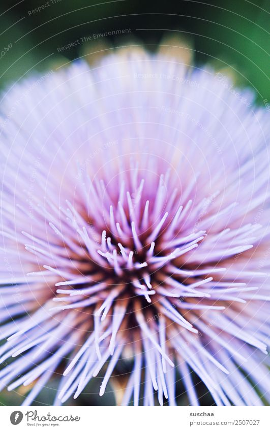 flower in violtett Flower Blossom Plant Nature Garden Violet Delicate pastel shades Nectar Summer warm out Close-up