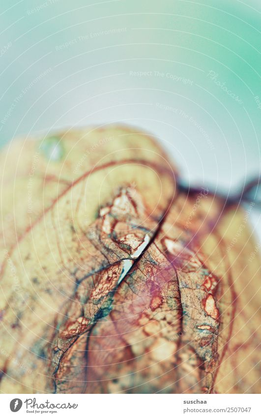 Nature Old Summer Plant Leaf Background picture Autumn Death Transience Dry Drought Rachis