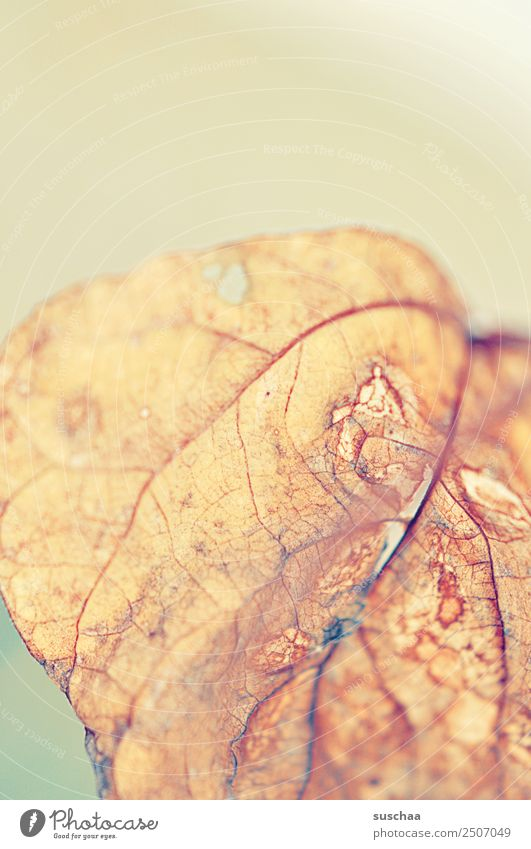 Nature Old Summer Plant Leaf Background picture Autumn Death Bright Transience Soft Dry Drought Rachis