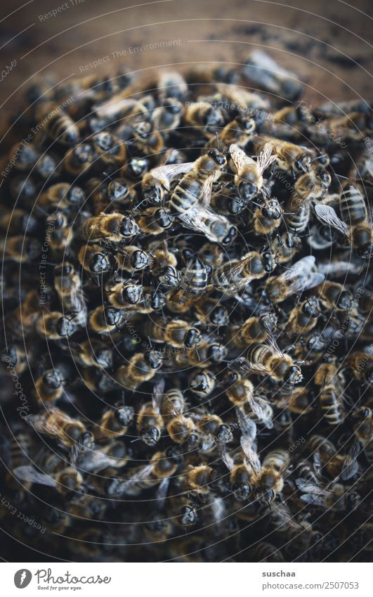 a lot of bees Bee Honey bee bee nest Beehive Bee-keeper Nature Farm animal Insect bee deaths bee colony Environmental protection ecological balance Agriculture