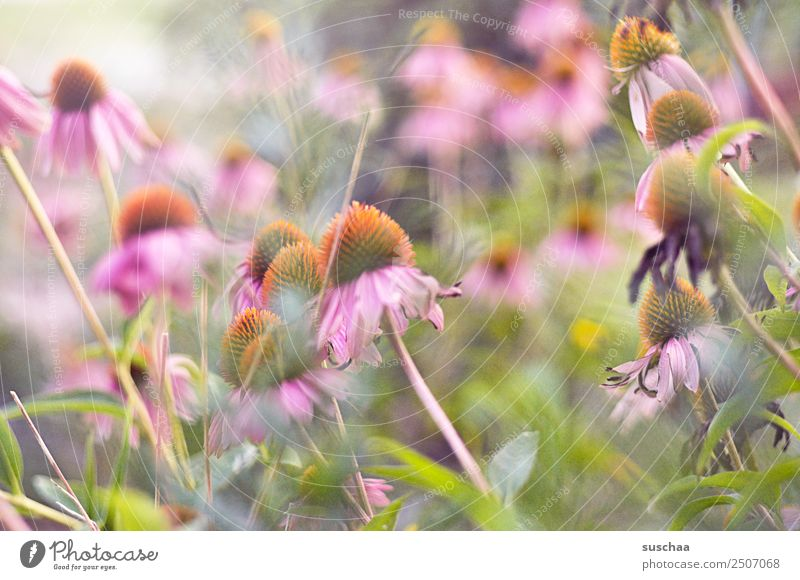 summer Nature Exterior shot Summer Warmth Plant Flower Blossom Garden Park Blossoming Colour photo Deserted Natural Inspiration Birthday Mother's Day Transience