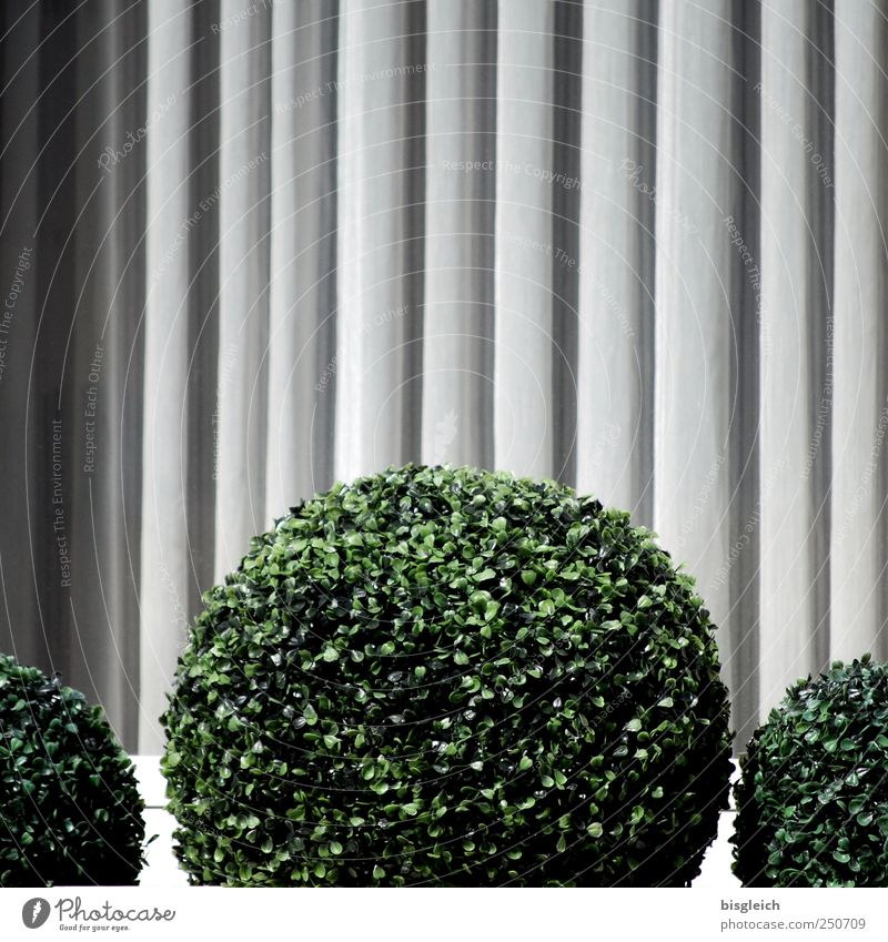 Green Plant Window Gray Circle Round Sphere Foliage plant Circular Pot plant