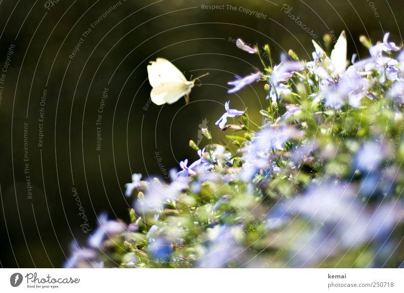 Nature Green Plant Summer Flower Leaf Animal Dark Environment Garden Blossom Bright Sit Flying Wing Violet