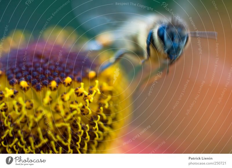departure Beautiful Summer Garden Work and employment Eyes Environment Nature Plant Animal Flower Blossom Wild animal Bee Collection Esthetic Honey Flying