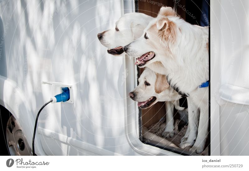 Blue White Summer Animal Life Freedom Dog Funny Friendship Trip Tourism Car door Group of animals Team Travel photography Animal face