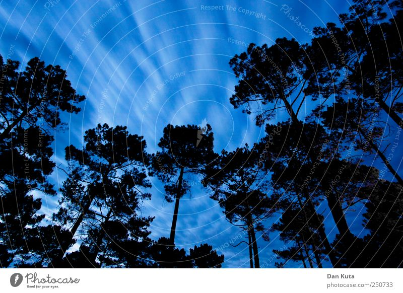 tractive power Sky Clouds Climate change Gale Authentic Dark Motion blur Stone pine Clearing Edge of the forest Wide angle Long exposure tall Silhouette