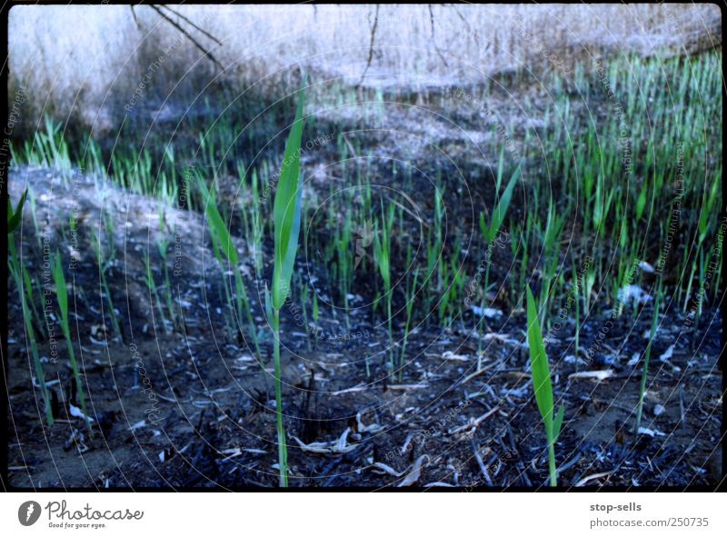 Nature Plant Green Black Environment Life Meadow Grass Field Growth Earth Fire Elements Blaze Hope Grain