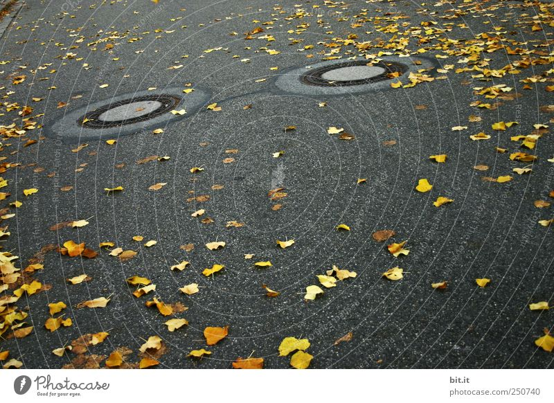 support Environment Autumn Climate Bad weather Traffic infrastructure Lanes & trails chill Yellow Gold Gray Black Street Pavement Asphalt Gully Drainage Gloomy