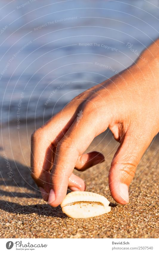 Child's hand reaches for a cowrie shell on the beach Summer Summer vacation Beach Ocean Hand Fingers 8 - 13 years Infancy Animal Sand Coast Snail Mussel Joy