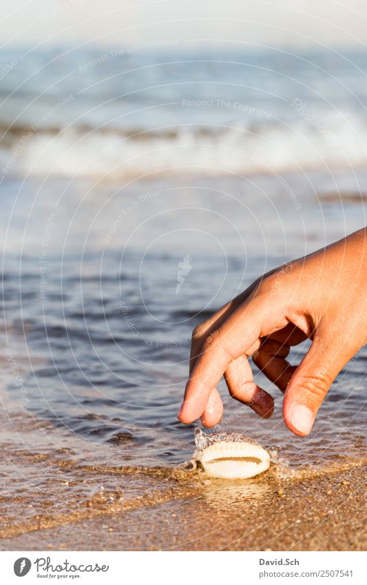 Child's hand reaches for a cowrie shell on the beach Leisure and hobbies Vacation & Travel Summer Summer vacation Beach Ocean Waves Hand Fingers 8 - 13 years