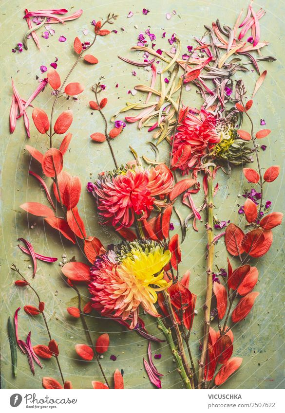 Flowers Still Life with Chrysanthemums and Red Branches Style Design Summer Decoration Feasts & Celebrations Nature Plant Autumn Leaf Blossom Bouquet Jump