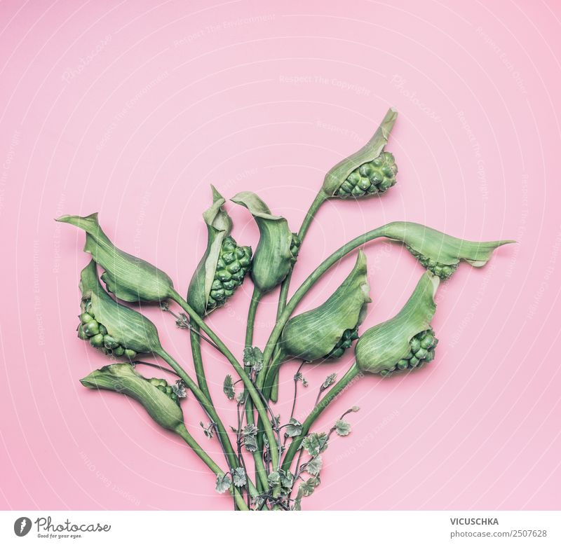 Green tropical flowers bundles on pink background Style Design Summer Table Nature Plant Flower Pink Calla Background picture Bundle Foliage plant Exotic