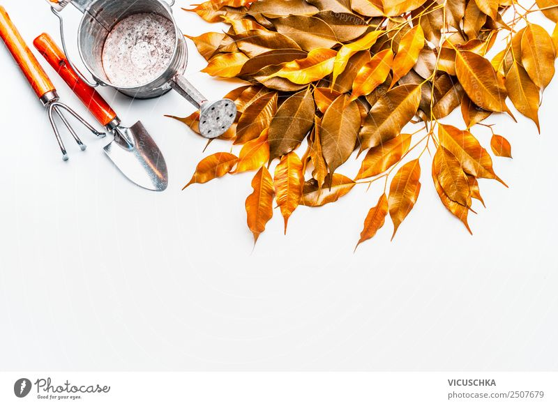 Autumn leaves with watering can and garden tools Style Design Leisure and hobbies Living or residing Garden Nature Leaf Yellow Background picture Gardening