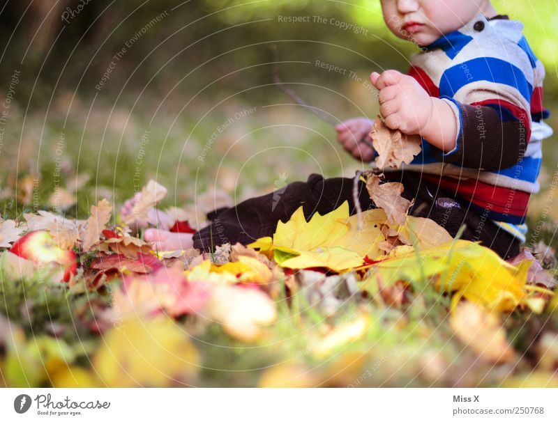 Human being Nature Joy Leaf Yellow Autumn Emotions Grass Park Baby Infancy Sit Happiness Beautiful weather Curiosity Toddler