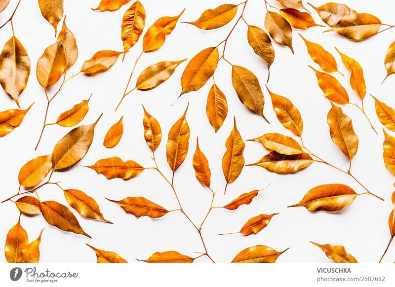 Yellow autumn leaves pattern on white Style Design Nature Plant Gold Background picture Autumn leaves Bright background flat lay Colour photo Studio shot