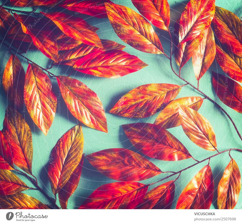 Bright orange red autumn foliage pattern Style Design Thanksgiving Nature Plant Autumn Leaf Garden Park Ornament Hip & trendy Yellow Background picture