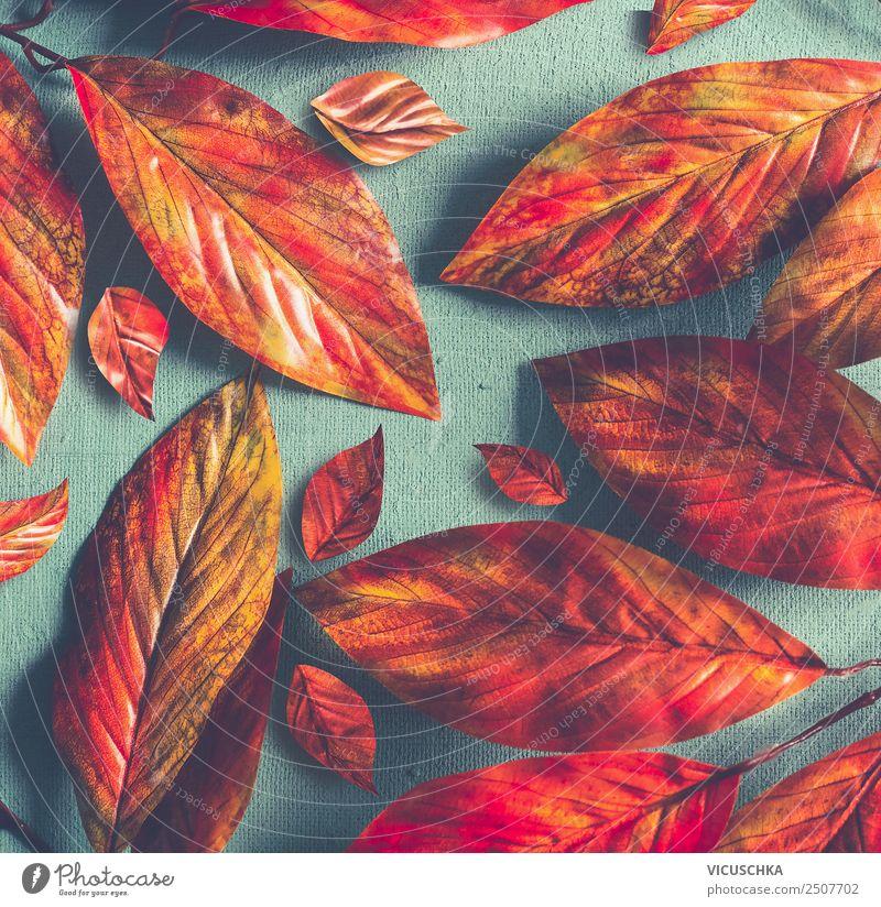 Yellow-orange autumn leaves on blue background Style Design Nature Autumn Decoration Ornament Hip & trendy Retro Orange Red Conceptual design Background picture