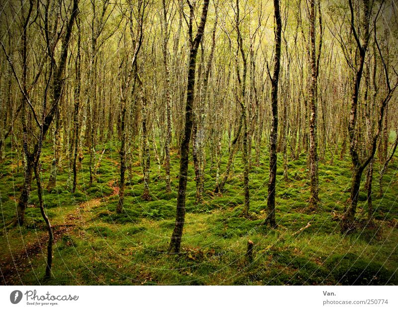Nature Vacation & Travel Green Beautiful Tree Calm Forest Environment Grass Lanes & trails Wood Brown Moody Illuminate Growth Earth