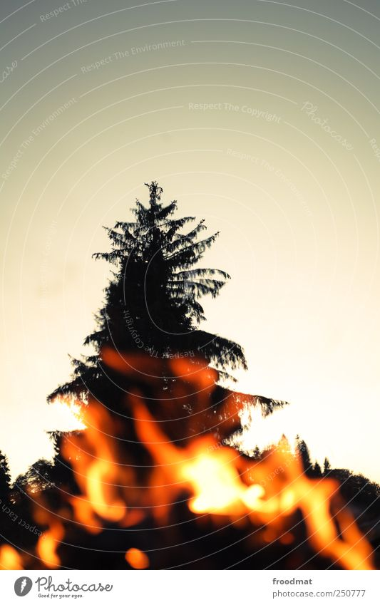 burn after reading Nature Fire Tree Relaxation Dream Threat Hot Warmth Exhaustion Fireplace Camp fire atmosphere Fir tree Evening Burn Break Forest fire
