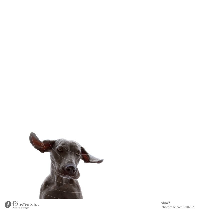 Animal Cold Above Dog Arrangement Beginning Esthetic Authentic Uniqueness Ear Simple Observe Animal face Curiosity Discover Make