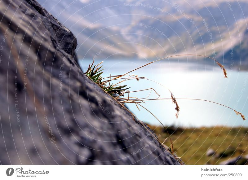 will to live Nature Plant Beautiful weather Grass Rock Alps Mountain Lake Blossoming Blue Gray ark Colour photo Exterior shot Close-up Abstract Deserted Day