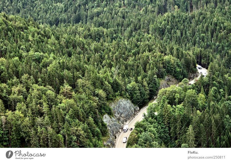 Nature Green Tree Plant Vacation & Travel Forest Street Mountain Environment Landscape Car Tourism Transport Traffic infrastructure Curve Motoring