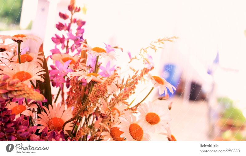 Pretty in pink Decoration Nature Plant Spring Summer Flower Grass Blossom Wild plant Bouquet Fragrance Natural Multicoloured Yellow Pink Red White Spring fever