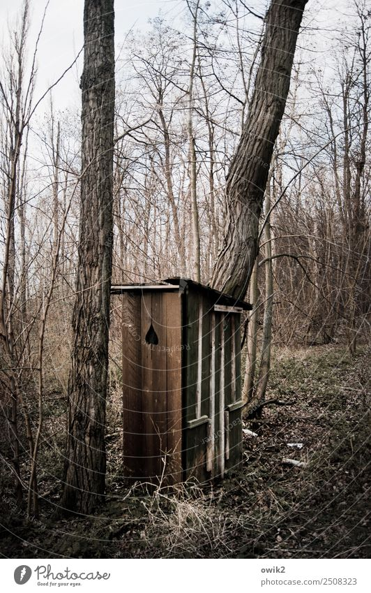 emergency cases Environment Nature Landscape Cloudless sky Beautiful weather Plant Tree Bushes Branch Tree trunk Forest Toilet Hut Wood Old Simple Natural