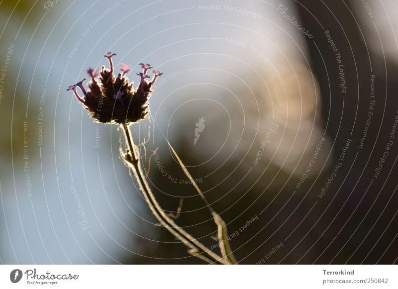 Plant Flower Garden Blossom Delicate Violet Smooth Spider Caresses Spider's web