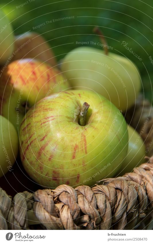 A basket full of apples Fruit Organic produce Vegetarian diet Healthy Eating Summer Autumn Garden To enjoy Apple Apple harvest Basket Collection Delicious