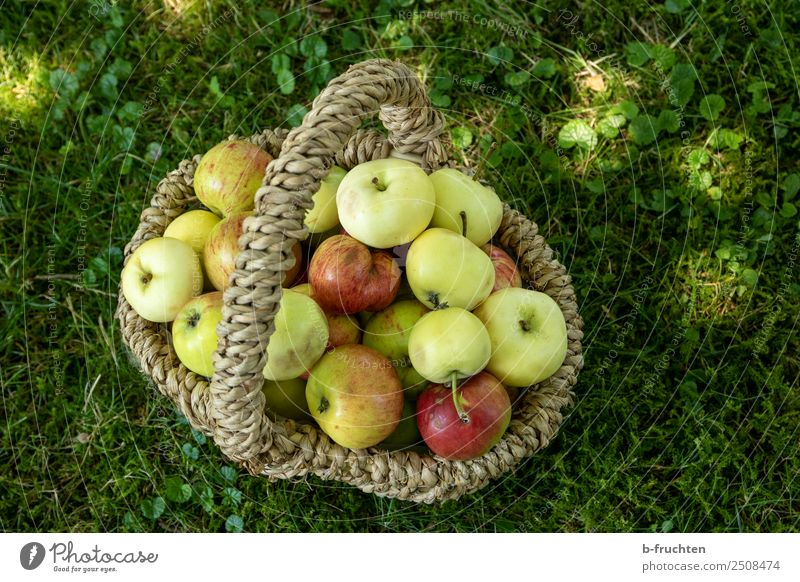 Fruit orchard - Basket with apples Picnic Organic produce Vegetarian diet Summer Grass Garden Meadow Fresh Healthy Apple Fruittree meadow Collection Harvest