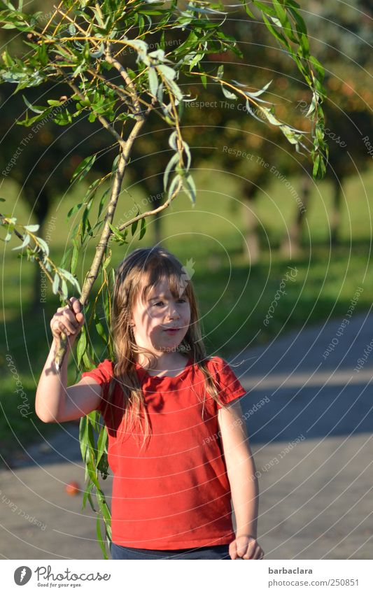 Child Nature Youth (Young adults) Plant Green Sun Tree Red Landscape Girl Joy Street Meadow Lanes & trails Playing Natural