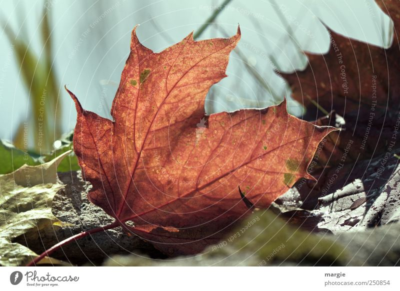Autumn messenger Environment Nature Landscape Plant Animal Earth Beautiful weather Grass Leaf Foliage plant Agricultural crop Early fall Autumnal colours