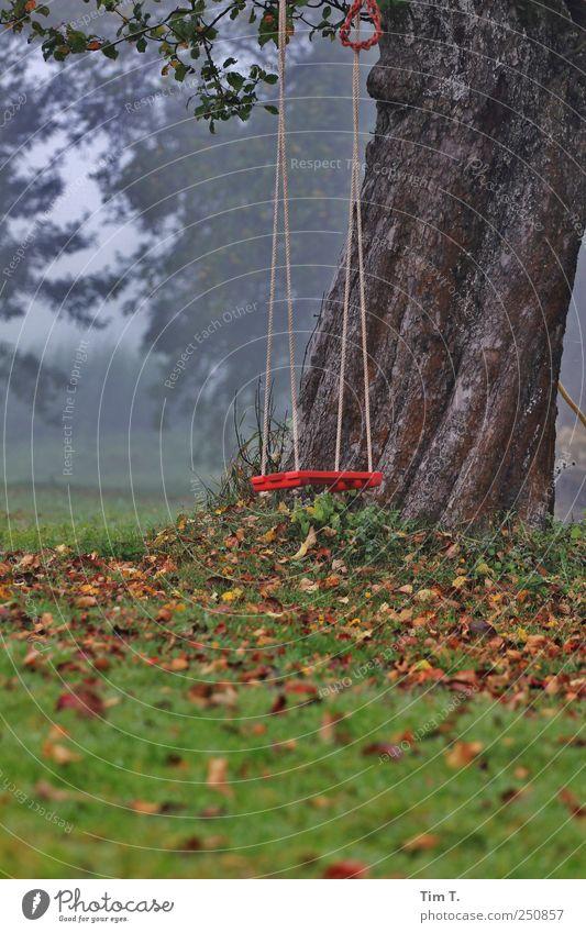apple tree dream Environment Nature Autumn Tree Grass Leaf Garden Meadow Swing Apple tree Colour photo Exterior shot Deserted Dawn