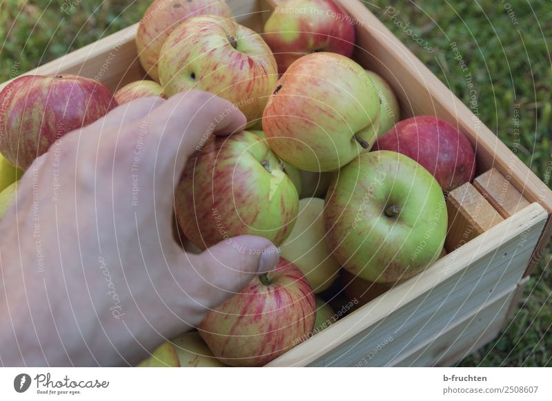 apple harvest Fruit Organic produce Vegetarian diet Healthy Eating Hand Fingers Beautiful weather Garden Box Wood Work and employment Select Utilize To hold on